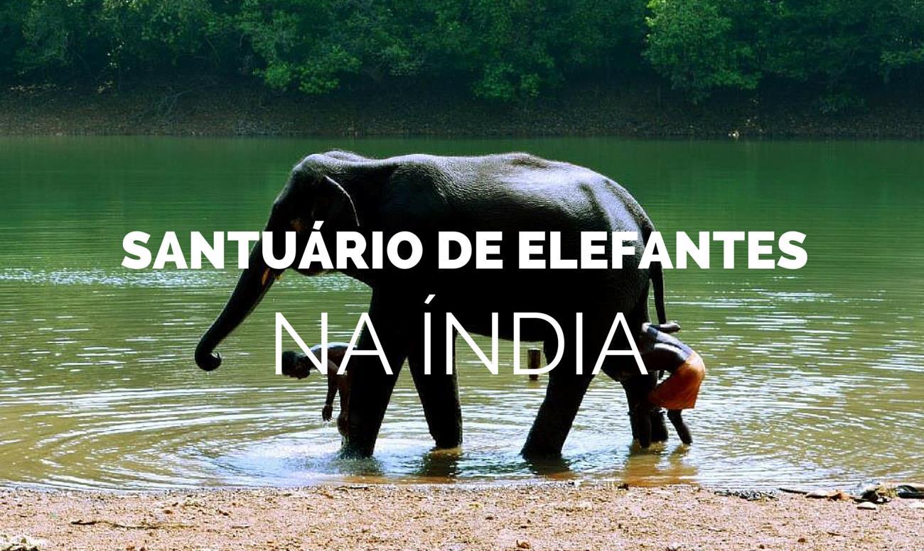 Uma Visita a um Santuario de Elefantes na Índia Kerala