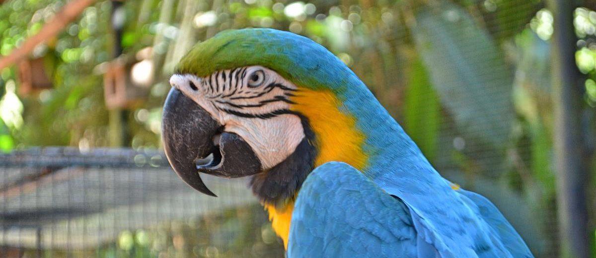 Vale a Pena Visitar o Parque das Aves de Foz do Iguaçu