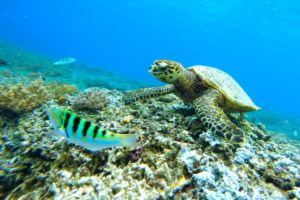 What To Do in Maui Hawaii